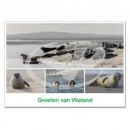 Ansichtkaart A6 Vlieland Zeehonden Compilatie